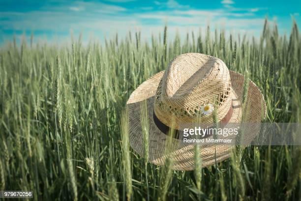 Straw hat with white flower on green wheat (Triticum spp.), Australia