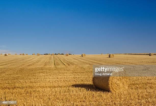 Straw hays bails under blue sky