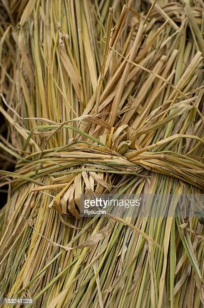 straw without futility - 麦わら ストックフォトと画像