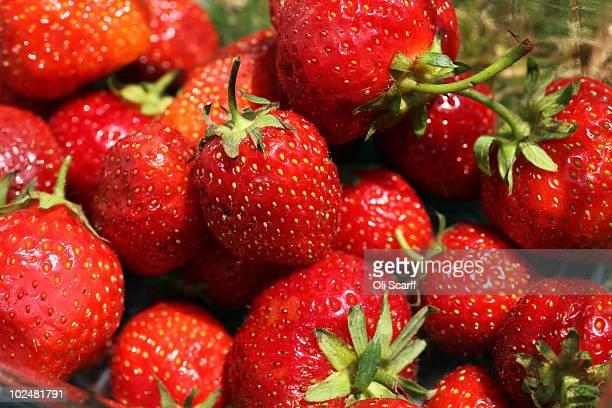 Strawberries are seen on Day Seven of the Wimbledon Lawn Tennis Championships at the All England Lawn Tennis and Croquet Club on June 28 2010 in...
