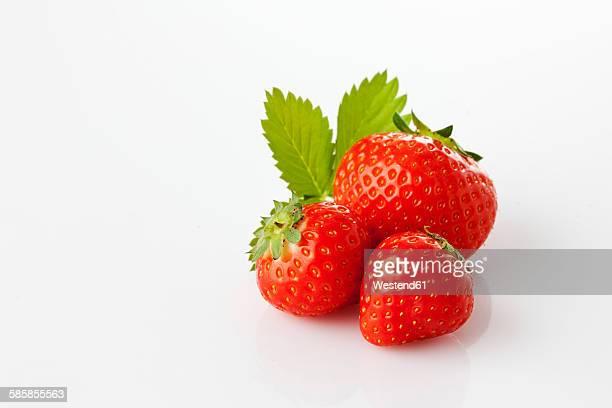 Strawberries, Fragaria, leaf