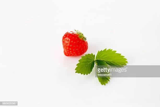 strawberries, fragaria, leaf - fraise photos et images de collection