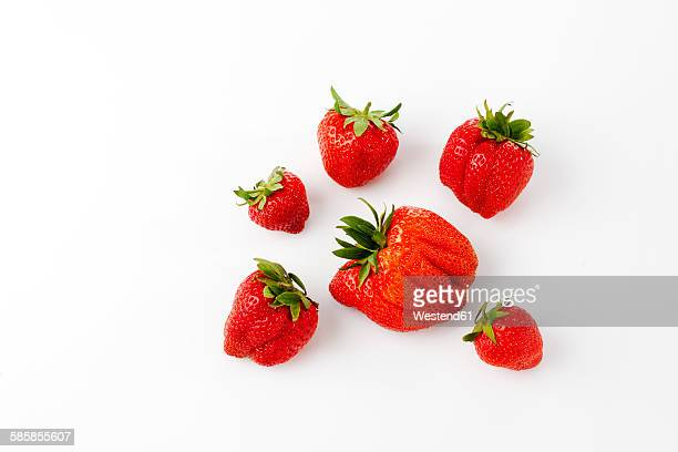 Strawberries, Fragaria