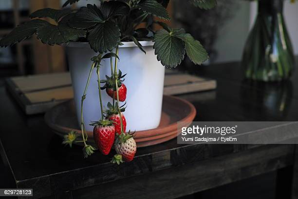 Strawberries Growing On Potted Plant At Table