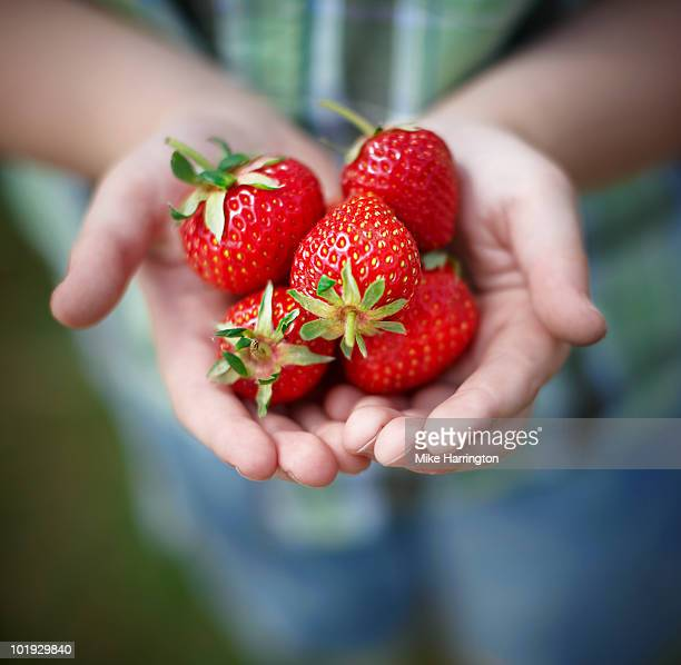 strawberries in hands - strawberry stock pictures, royalty-free photos & images
