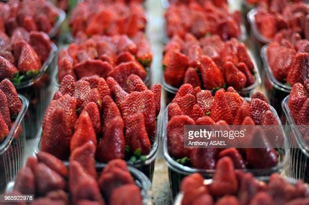 Strawberries March 29 Tel Aviv Israel