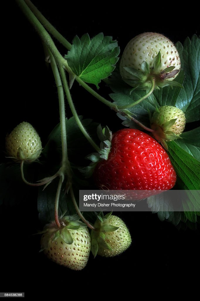 Strawberries High-Res Stock Photo - Getty Images