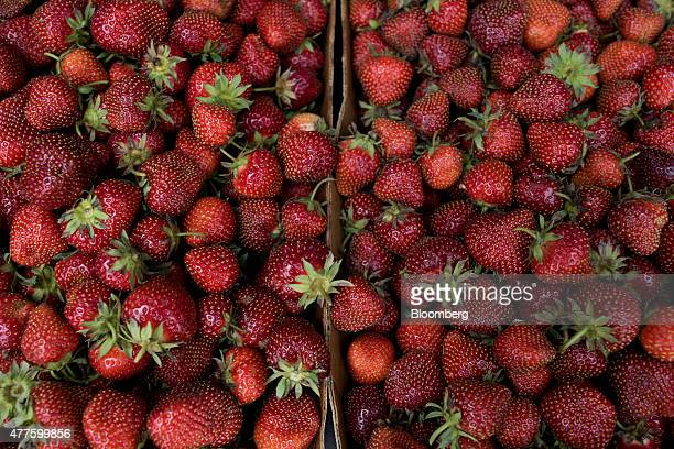 Strawberries sit in a customer's vehicle at Plow Creek Farm in Tiskilwa Illinois US on Tuesday June 9 2015 US strawberry production fell 145 percent...