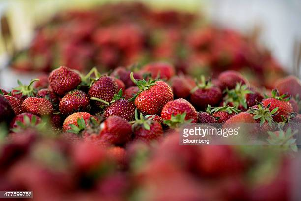 Strawberries sit on a rack at Plow Creek Farm in Tiskilwa Illinois US on Tuesday June 9 2015 US strawberry production fell 145 percent in April...