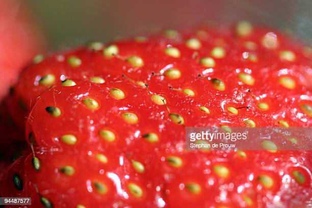 strawberry close-up - stephan de prouw stock pictures, royalty-free photos & images