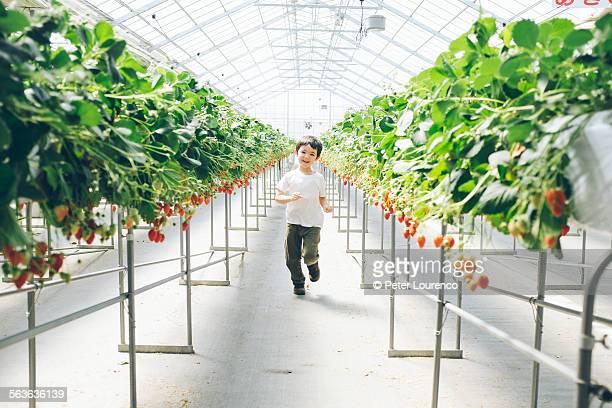 strawberry house - peter lourenco stockfoto's en -beelden