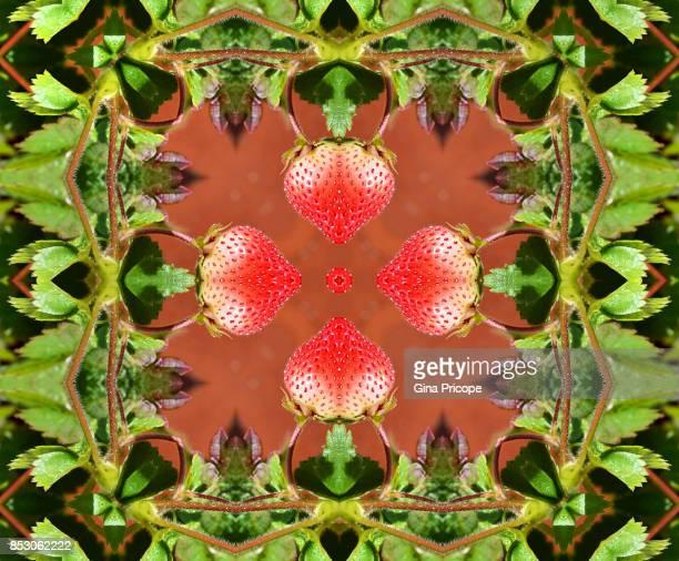 Strawberry kaleidoscope