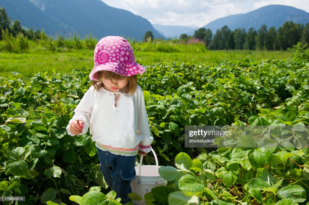 Little girl picking strawberries at a farm