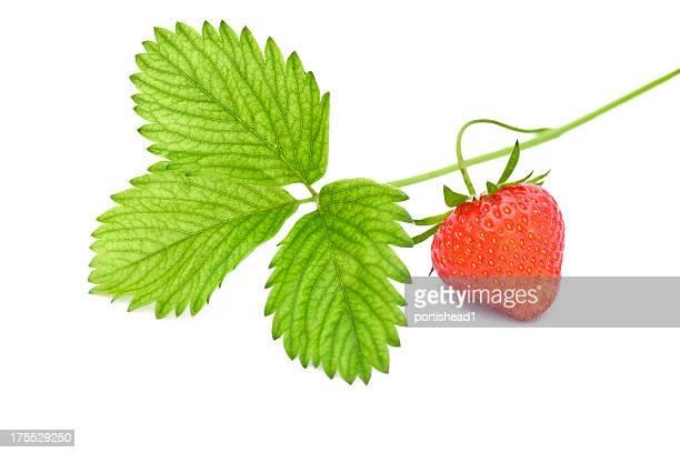 fraise - fraise photos et images de collection