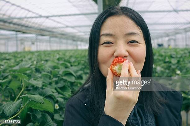 strawberry smile - peter lourenco stock pictures, royalty-free photos & images