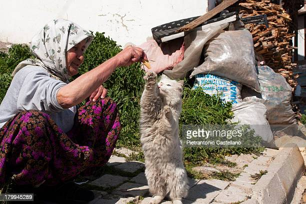 Stray Angora cat with odd eyes plays with a lady who feeds it.
