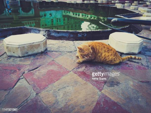 stray cat at fatehpuri masjid - chandni chowk, delhi, india - old delhi stock pictures, royalty-free photos & images