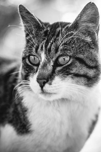 Stray Cat, in black and white