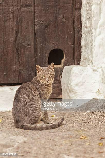 Stray cat in Peñiscola, Castellón, Spain.