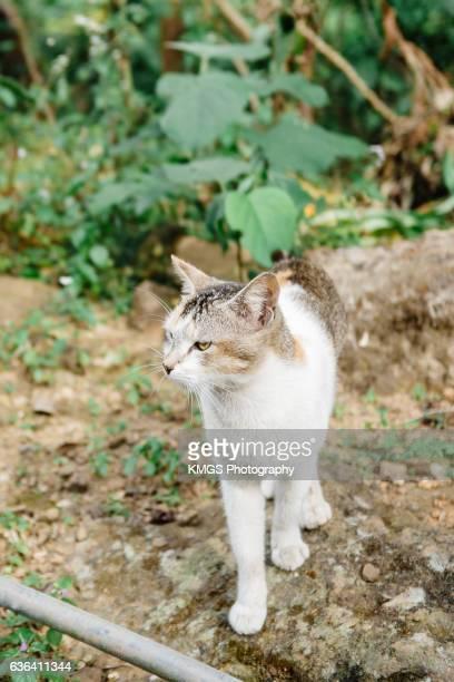 Stray Cat, India