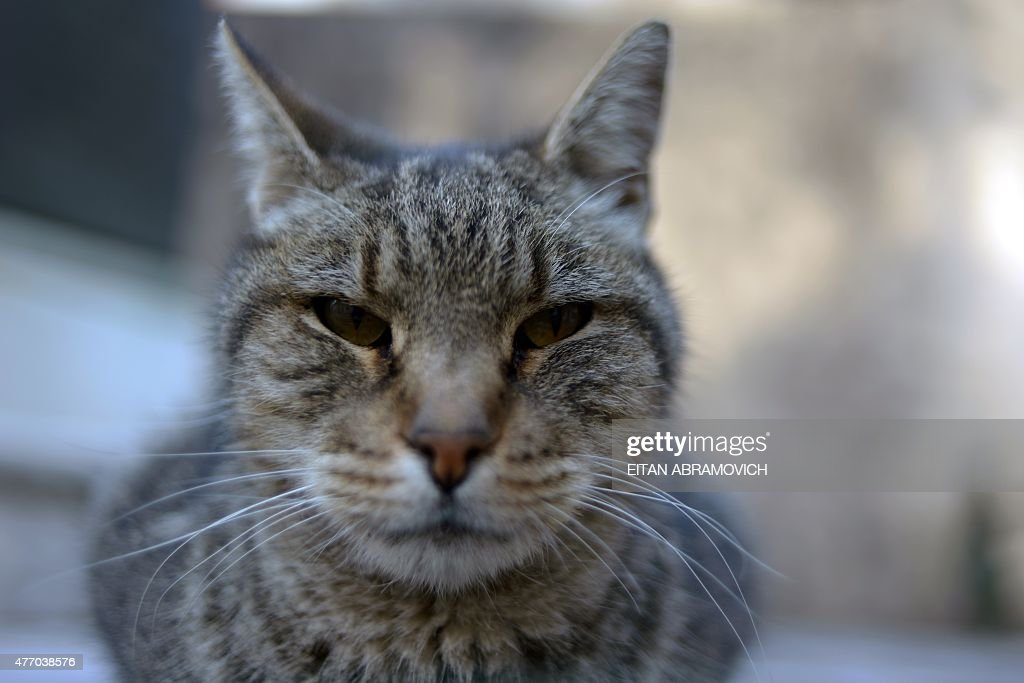 ARGENTINA-CAT-FEATURE : News Photo