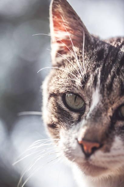 Stray Cat looking at camera