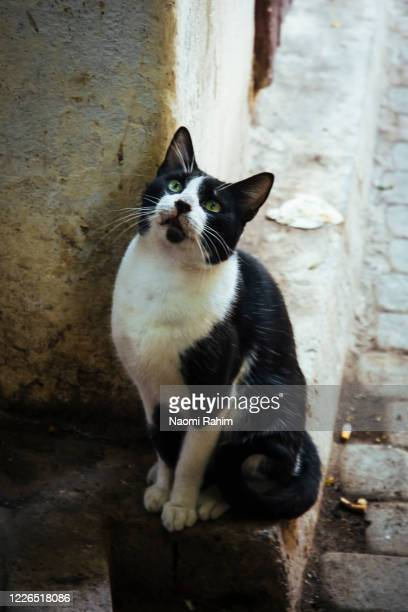 stray cat looking up in the old medina, fez, morocco - stray animal stock pictures, royalty-free photos & images