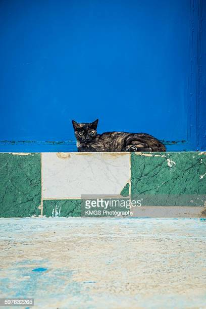 Stray Cat On a Step in Chefchaouen