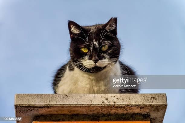 stray cat - vicente méndez fotografías e imágenes de stock