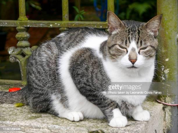 stray cat - leonardo costa farias stock pictures, royalty-free photos & images