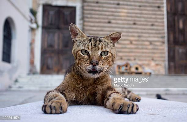 A stray cat poses in front of Dingo cat shelters in Campo San Lorenzo on August 27 2011 in Venice Italy Dingo is the AngloVenetian association part...