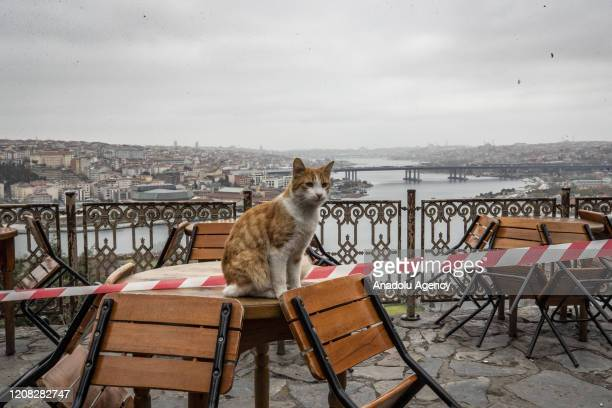 Stray cat sits on a table as Pierre Loti is empty after authorities urging people to stay at their homes as part of preventive measures against new...