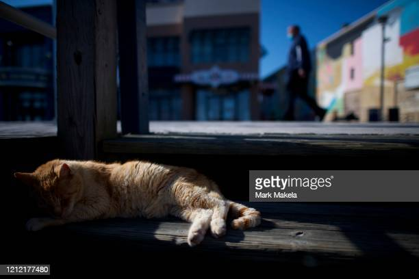 A stray cat sleeps on the boardwalk steps as a pedestrian with a mask walks past during the coronavirus pandemic on May 7 2020 in Atlantic City New...