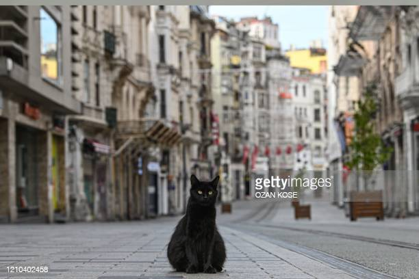 TOPSHOT A stray cat stays on empty Istiklal street the main shopping center of Istanbul on April 19 as Turkish government announced a twoday curfew...