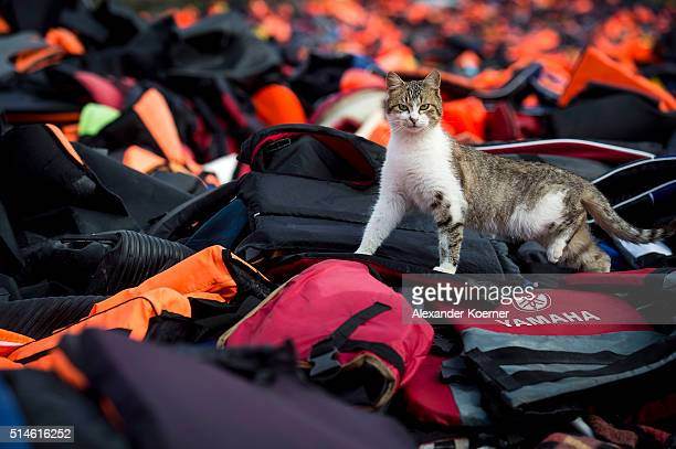 A stray cat walks on used life vests lying on a makeshift rubbish dump hidden in the hills above the town on March 10 2016 in Mithymna Greece Local...