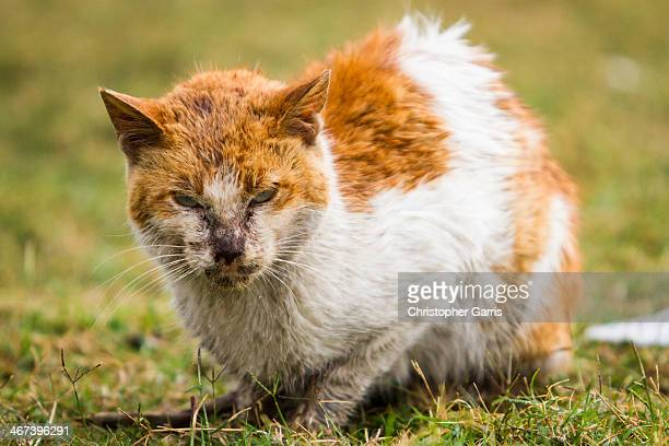 Stray cat wet from a rare rain storm is seen in a public park in Dammam, Eastern Saudi Arabia.