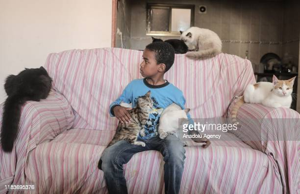 Stray cats are seen at the house of Palestinian Said alAr as he helps them with his union and raise awareness on the issue in AlZahra Gaza on...