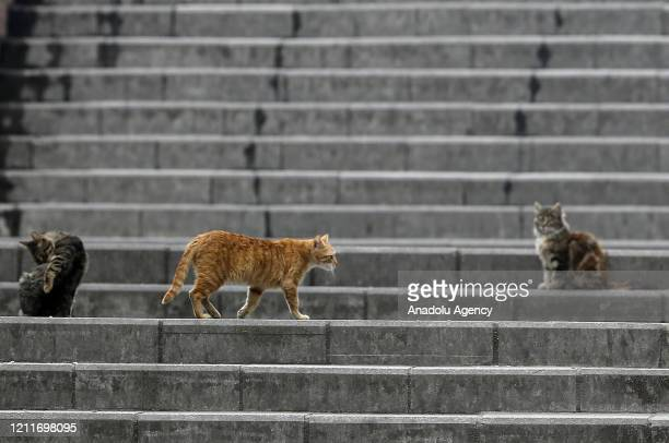 Stray cats are seen on stairs at an empty street in Ankara, Turkey on May 4, 2020. Turkey lifted a 72-hour coronavirus restrictions as of midnight...