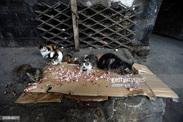 Stray cats eat raw meat thrown by a Syrian butcher at the entrance of his shop in an alley in the old part of the capital Damascus on April 13 2016 /...