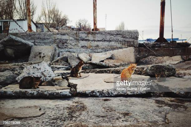 Stray Cats On Odessa Waterfront