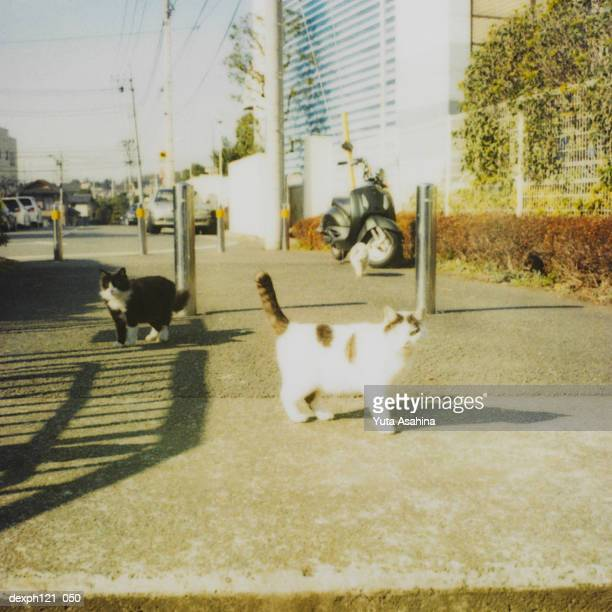 Stray cats on pavement