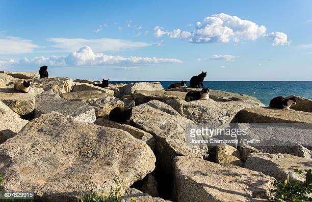 Stray Cats On Rocks By Sea Against Sky