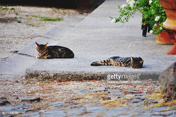 Stray Cats Relaxing On Floor