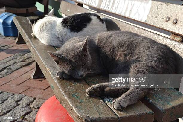 Stray Cats Sleeping On Wooden Bench