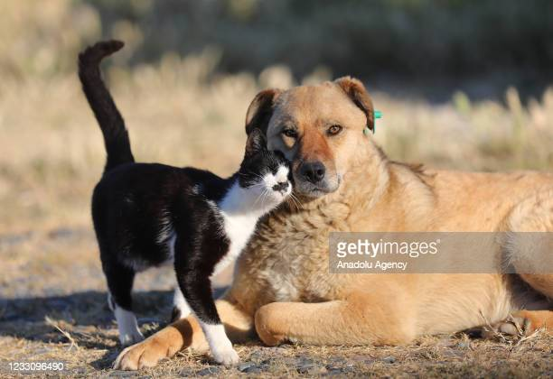 Stray dog and a stray cat are seen as they share their feeding and living spaces and sometimes play games together in Yalova, Turkey on May 20, 2021.