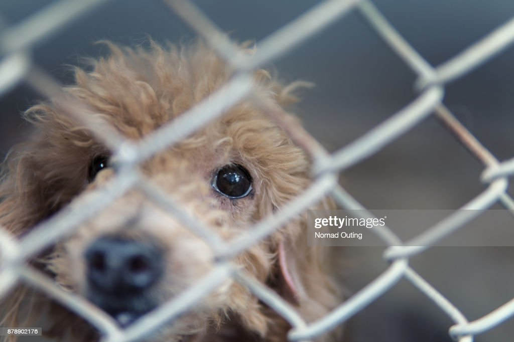 stray dog behind fence,homeless dog lonely,dirty dog alone face : Stock Photo