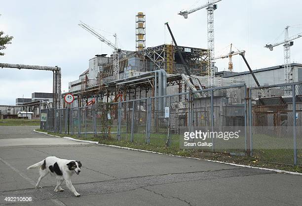A stray dog dubbed Ivanich by local employees walks past the remains of reactor number four at the former Chernobyl nuclear power plant on September...