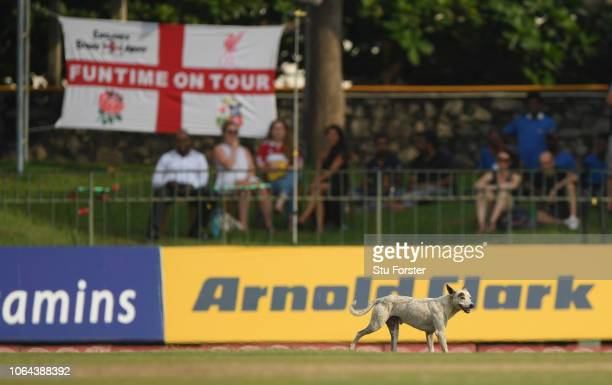 Stray dog invades the field during Day One of the Third Test match between Sri Lanka and England at Sinhalese Sports Club on November 23, 2018 in...