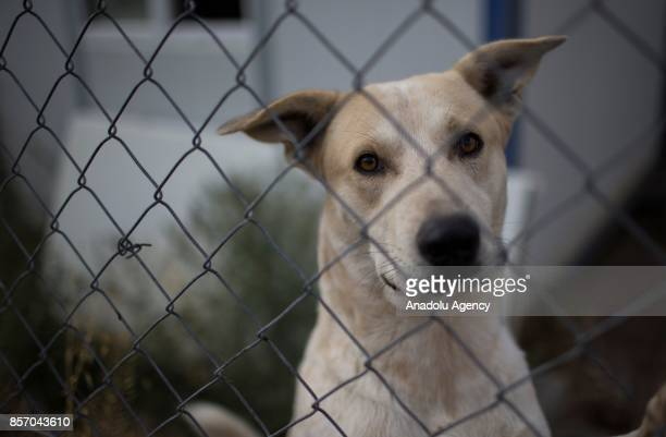A stray dog is seen in a cage at the shelter in Cayyolu district of Ankara Turkey on October 3 2017 This animal shelter hosts 450 different species...