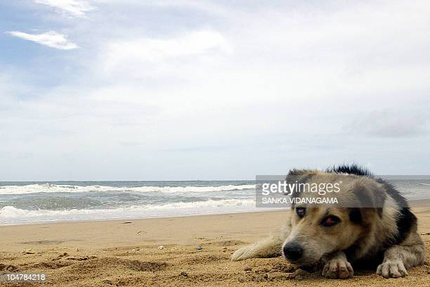 OFFBEAT A stray dog lies on the beach in Colombo13 September 2007 Sri Lankan police have made their first public appeal to pet owners to donate their...